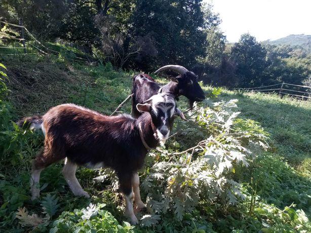 Casal das Cabras