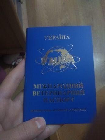 Продам щенков стафбультерьеры с паспортом