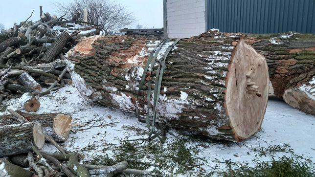 Topola kłoda drewno pień 4 sztuki 160cm średnicy zdrowe do przetarcia!