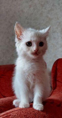 Кошечка Міа. Гарантована безкоштовна стерилізація