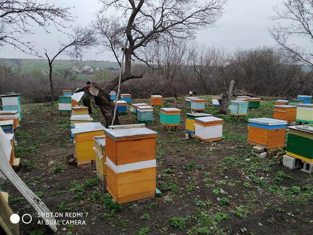Продам Пчёлопакеты и пчелосемьи на 300 рамке дадан.