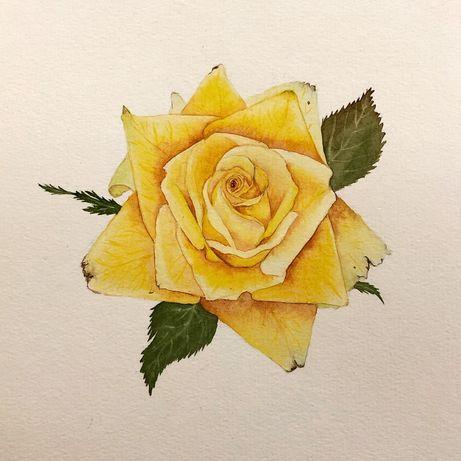 Желтая Роза акварель ботанический рисунок картина авторская работа