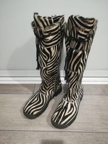Śniegowce bumper zebra
