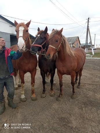 Продаються коні...