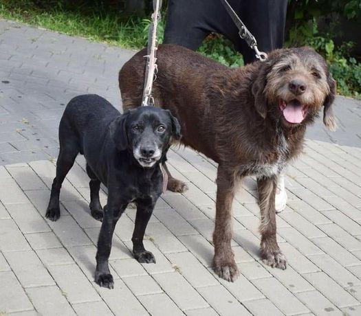 Psy do adopcji razem samce kochane szukają dobrego domu za darmo