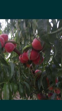 Продам Плодовый сад 38 соток