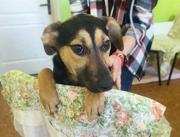 Молоденькая ласковая собачка срочно в семью, 6 мес, стерильна