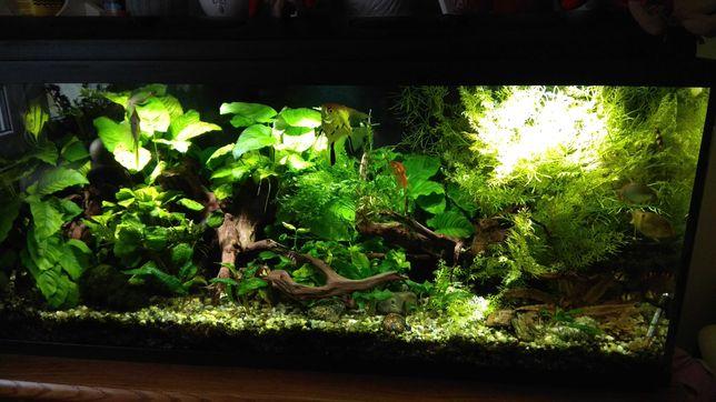 Akwarium 240 l aquael unimax 500