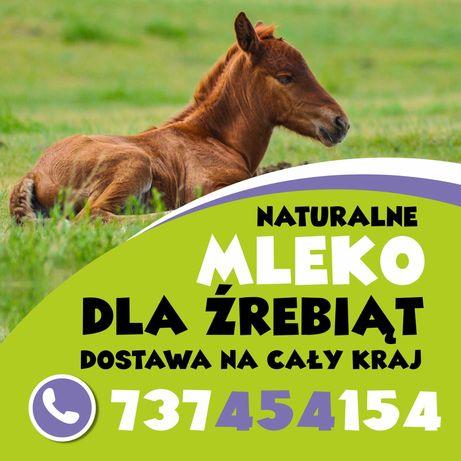 zrebaki kuce konie  cała Polska