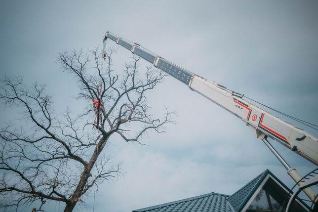 Спилить срезать удалить кронировать обрезать дерево услуги альпинистов