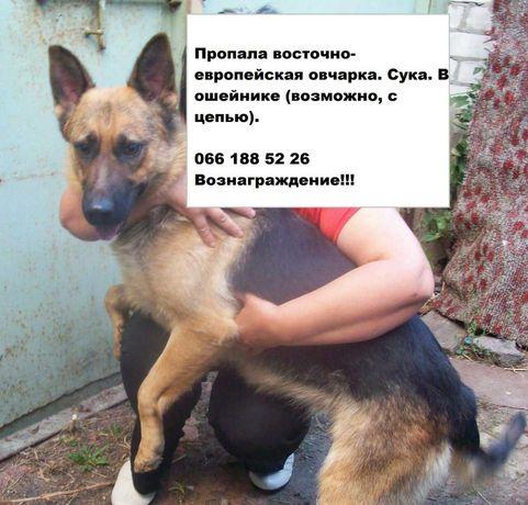Потерялась собака овчарка Харьков Салтовка