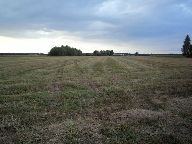 Ziemia rolna  oddam w dzierżawę