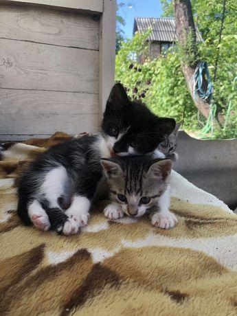 Кошенята
