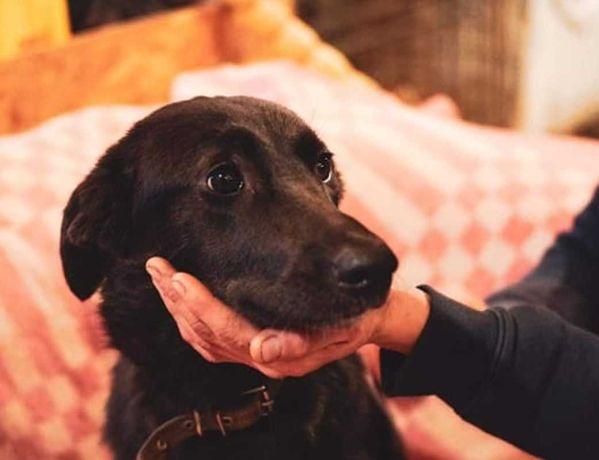 Красивая черная собака, цвета вороного крыла, среднего размера, 1 г1ё