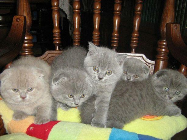 Плюшевые котята ждут Вас!