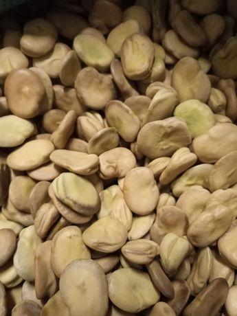 Bób Bizon i Bachus, nasiona z plantacji nasiennej. Wysyłka.