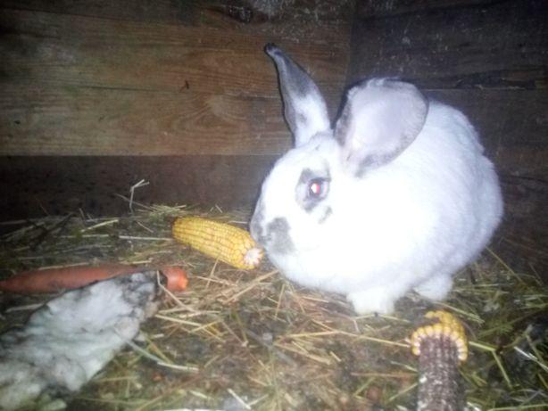 Продам кроликов ризных порид