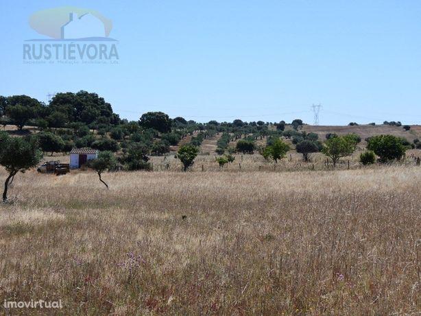 5 Terrenos rústicos contíguos   Estremoz   com Olival e Água