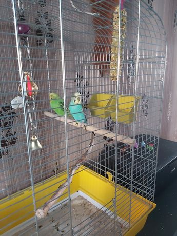 Papużki faliste parka + wyposażenie
