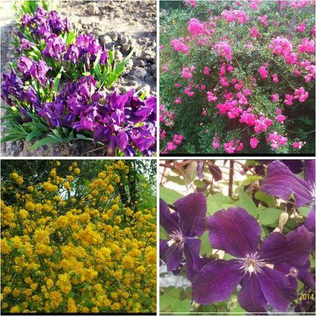 Різні квіти