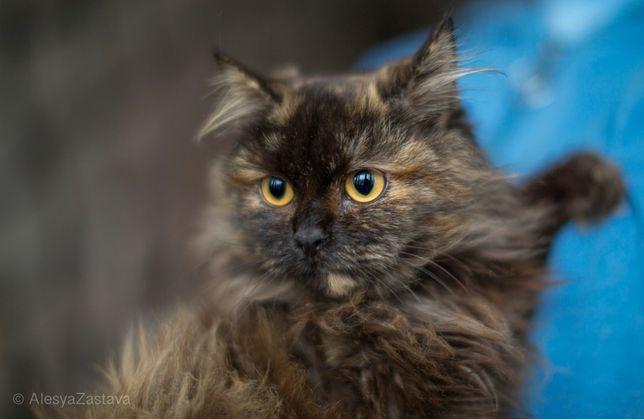 Клара, 6 мес, котенок, кошечка, красивая кошка