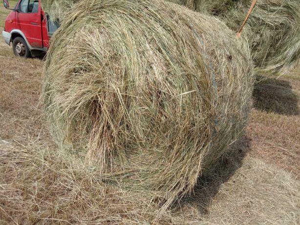 Сено в рулонах полевое и луговое с доставкой