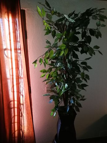 Árvore grande com suporte
