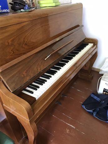 Пианино Calisia