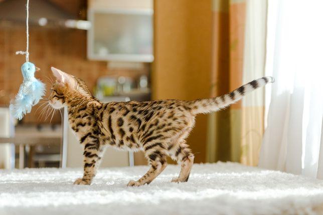 яркие котята с ласковым характером