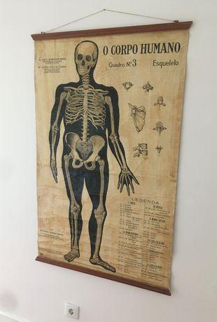 cartaz / poster escolar anatomia vintage 1937