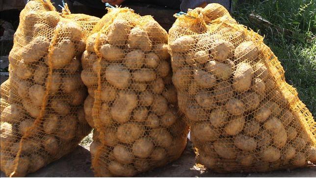 Młode ziemniaki odmiana Denar oraz Gala 0.90 zł - Kg