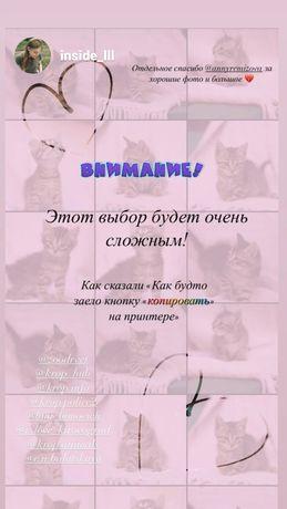 Отдам котеек(котят) !!! Бесплатно