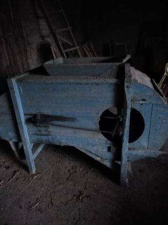 Wialnia drewniana niebieska