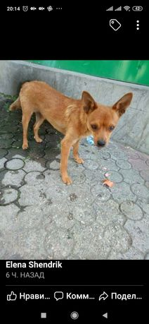 Пропала найдена собака Чаривная