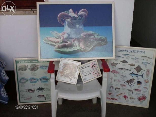 Conjunto de quadros de decoração para peixaria
