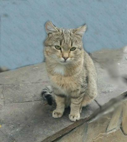 Кот Васька(6 мес)