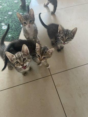 Doacao de gatos com 3 meses , tenho 3 femeas e 1 macho