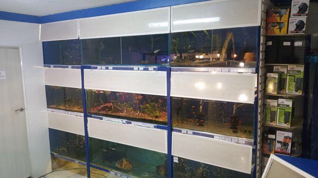 Большой выбор аквариумных рыбок