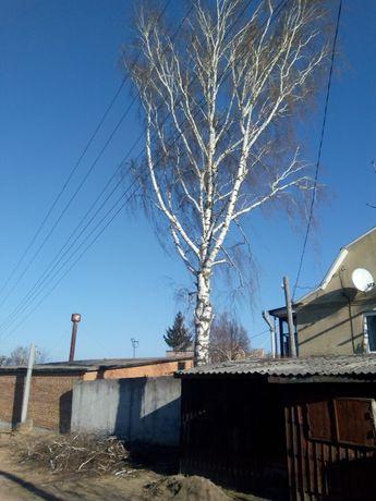 Обреска  деревев. Обрізка дерев.