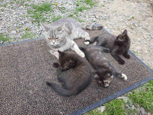 Продам котиків.
