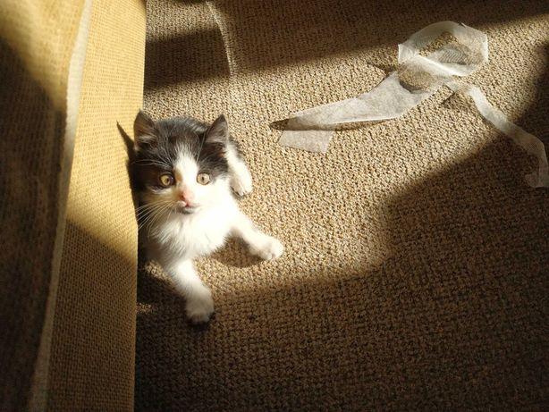 Милая и игривая девочка котенок (прививки и стерилизация оплатим)