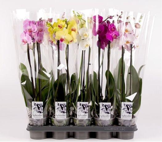 Растения, Орхидеи и Цветы оптом из Голландии, Европы, Азии, Китая, ЕС