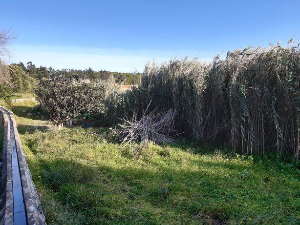 Limpeza de terrenos/corte Arvores
