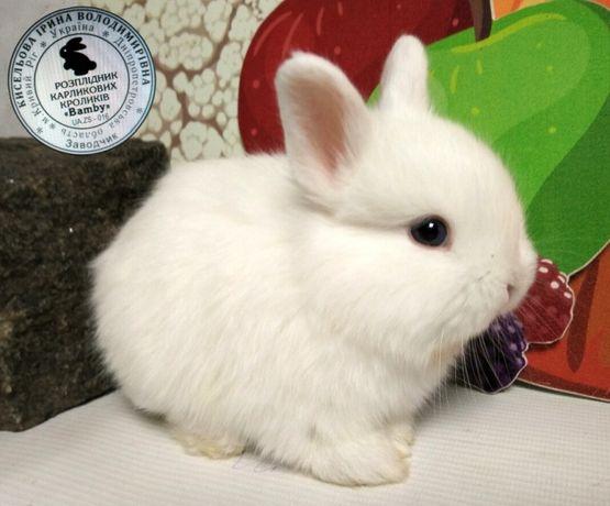 """Карликовые кролики"""" BAMBY"""""""