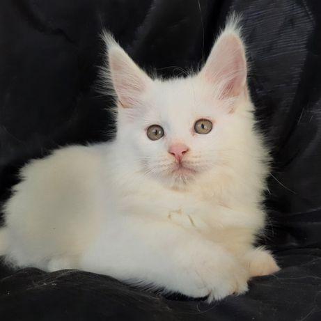 Очень красивая белая девочка Милашка