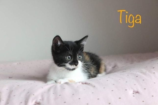 Tiga szuka swojego kąta!