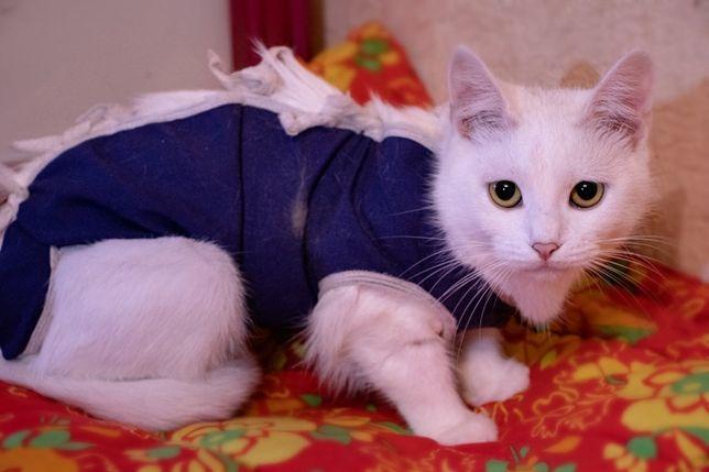 Белая кошка, котята, котёнок котики бесплатно в добрые руки