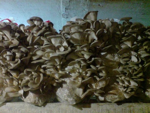Мицелий грибов штам к-17