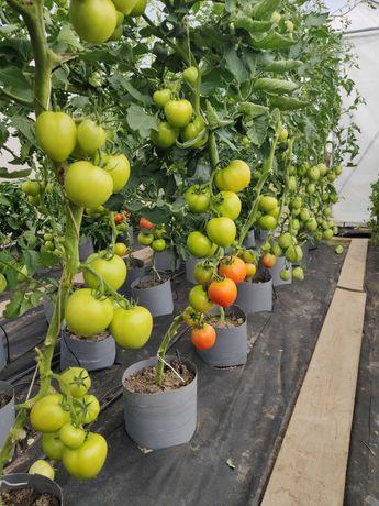 Warzywa bez nawozów sztucznych i bez środków ochrony roślin