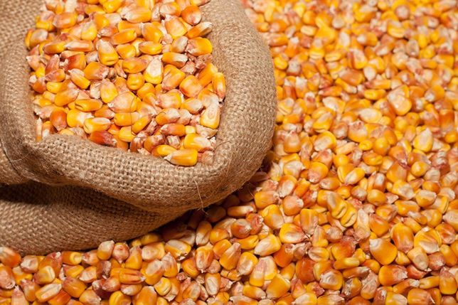 Продам зерно ячмень,кукурудза,пшеница